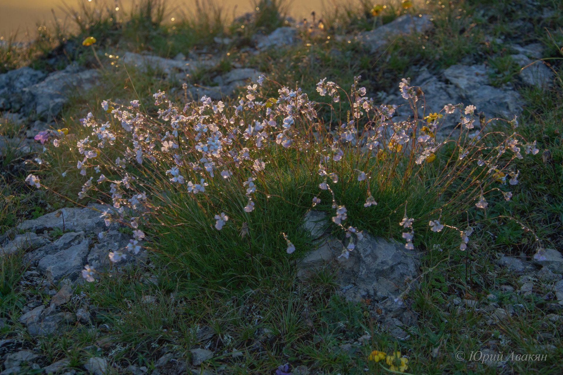 цветы на восходе