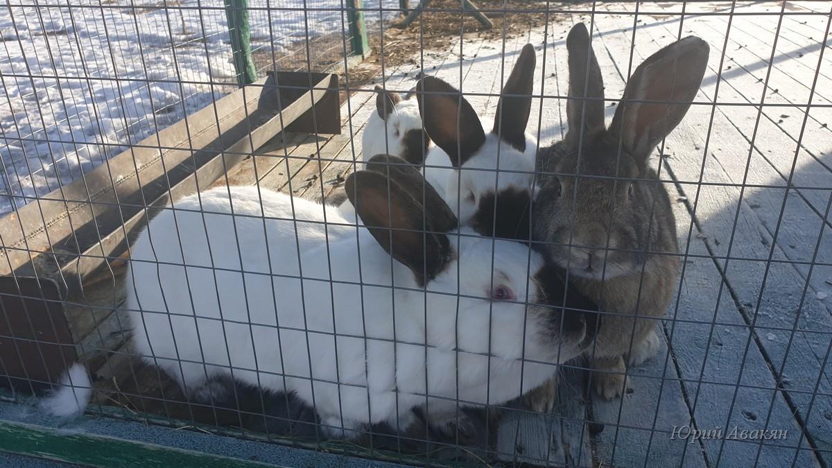 Экскурсия на обсерваторию - кролики